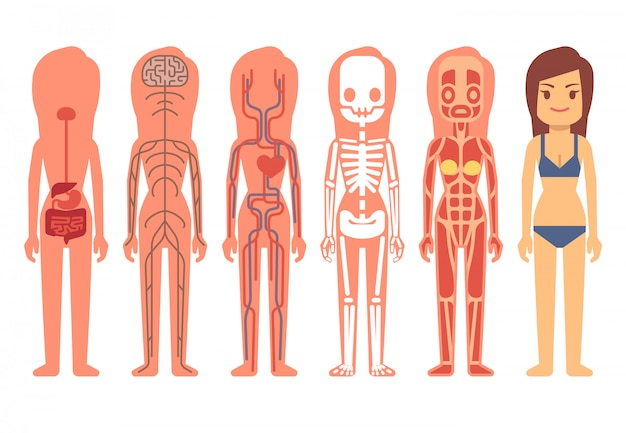 Medical woman body anatomy vector illustration Premium Vector