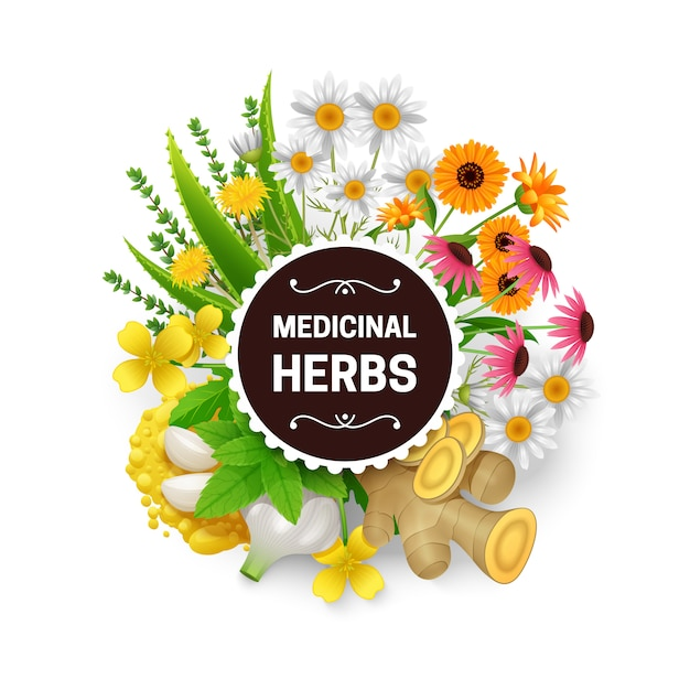 Medicinal natural healing plants Free Vector