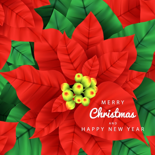 Merry christmas background vector with poinsettia plants Premium Vector
