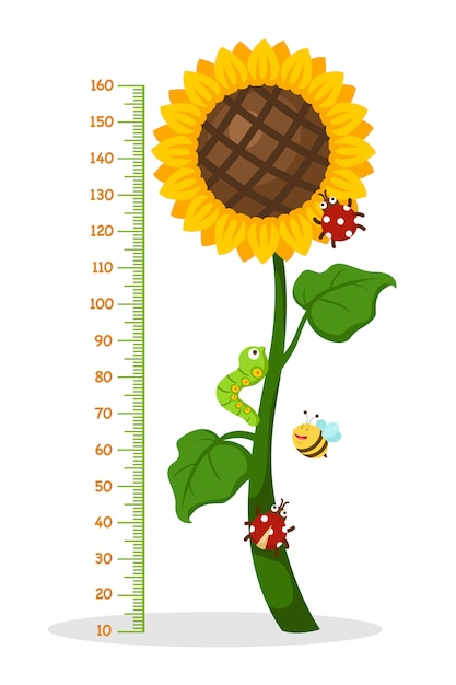 Meter wall with sunflower Premium Vector