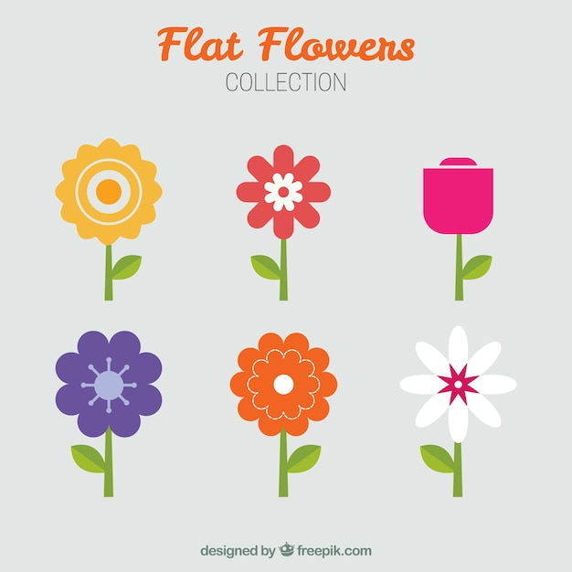 Minimalist collection of flowers