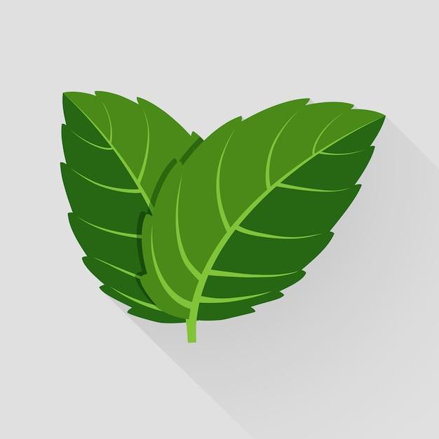 민트 벡터 나뭇잎. 식물 박하, 녹색 잎 박하, 유기 및 신선한 박하 그림 무료 벡터