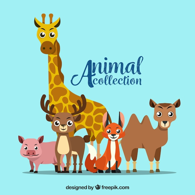 Modern animal collection