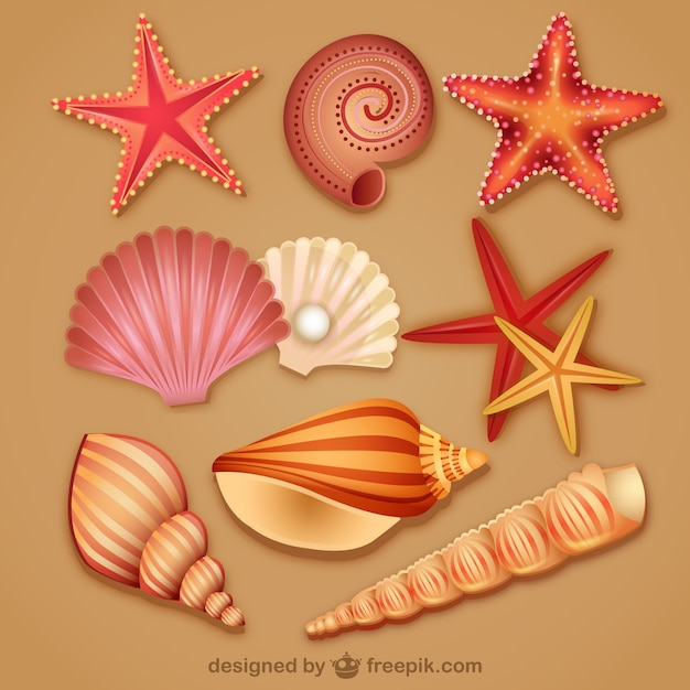 Modern lovely seashell icon Free Vector