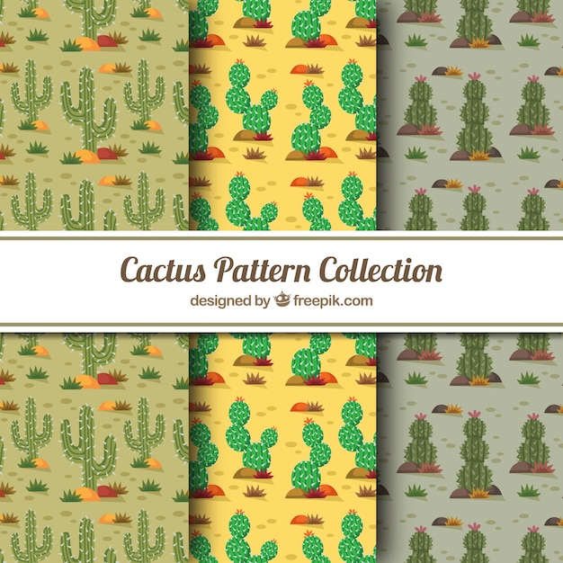 Modern pack of colorful cactus patterns