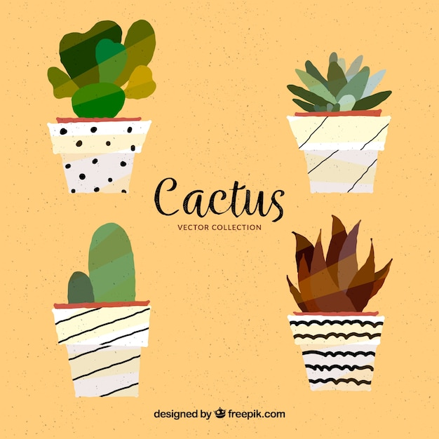 Modern pack of flat cactus