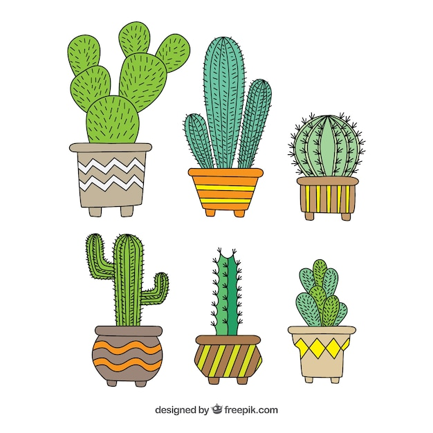 Modern pack of hand drawn cactus