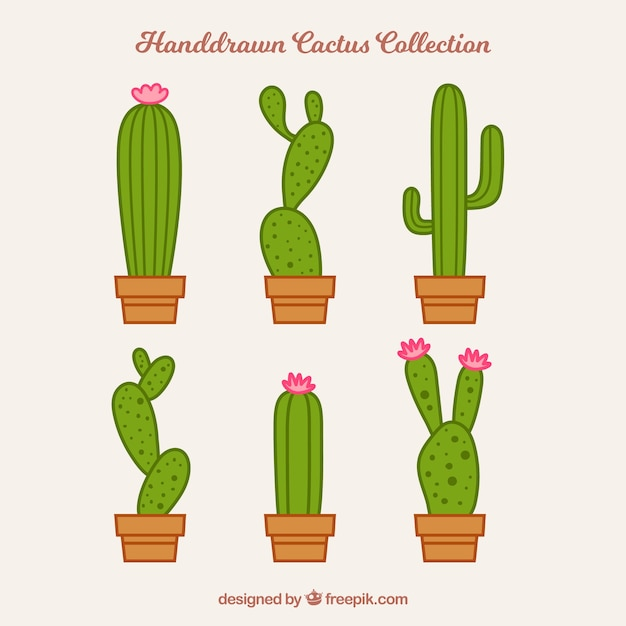 Modern pack of lovely cactus