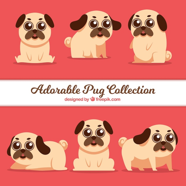 Modern pack of pugs with lovely style
