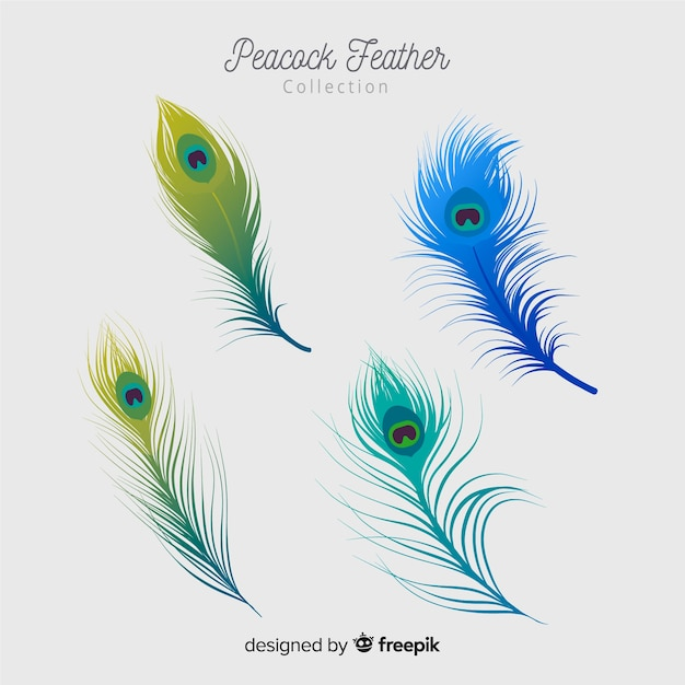Modern peacock feather collection with realistic design Free Vector