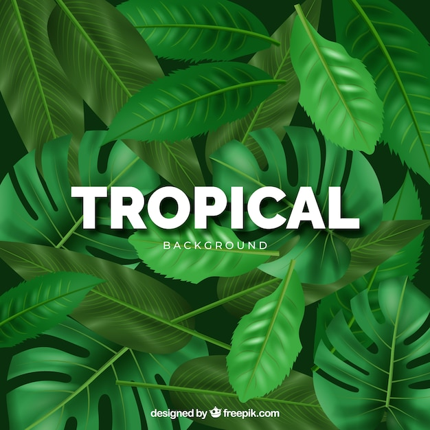 Modern tropical background with realistic design Free Vector