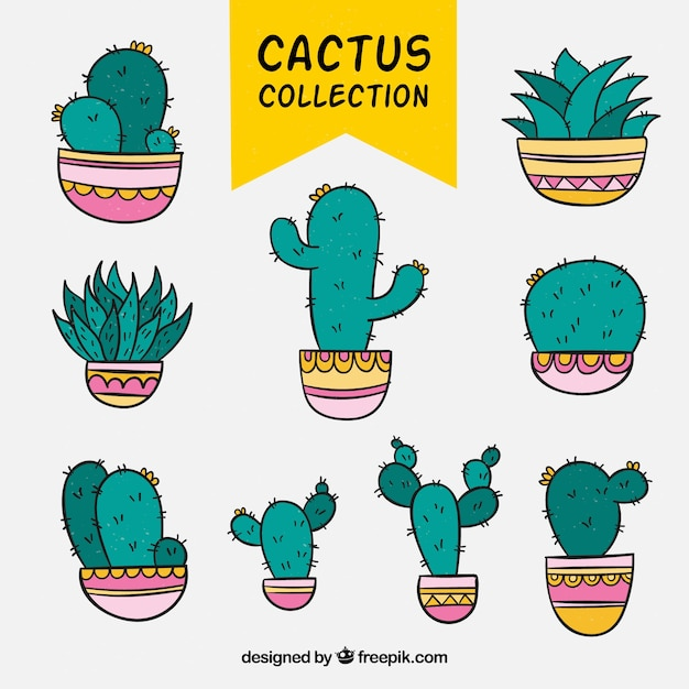 Modern variety of colorful cactus