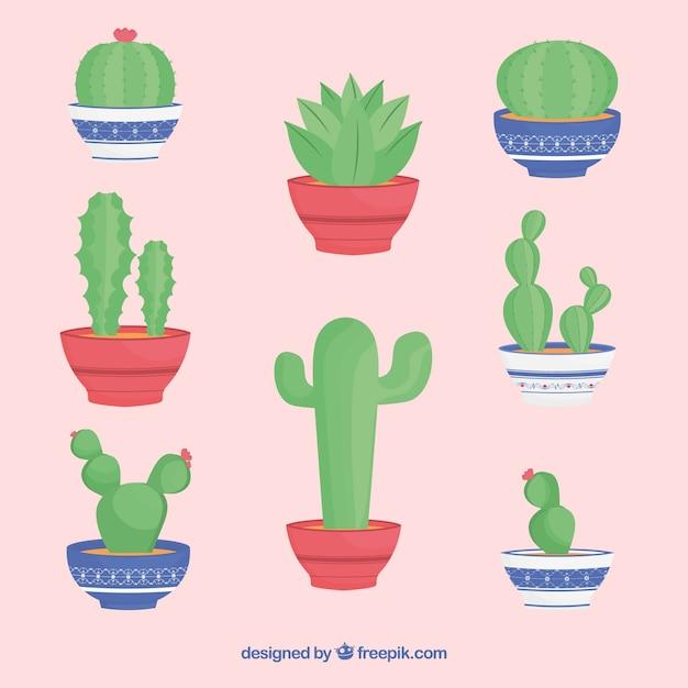 Modern variety of flat cactus