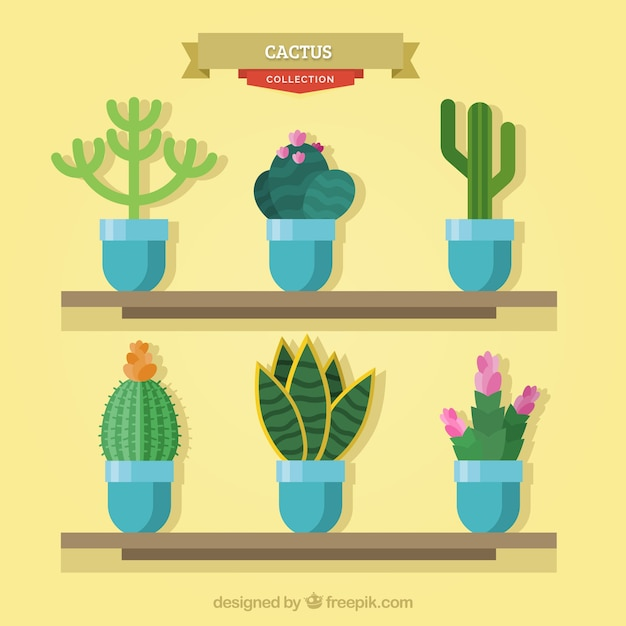 Modern variety of lovely cactus