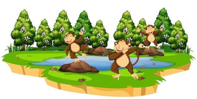 Monkey in nature scene Free Vector