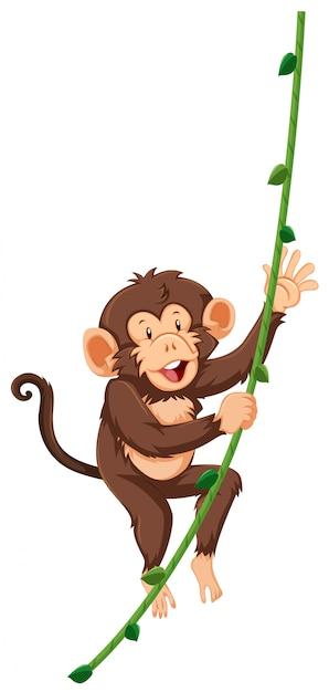 Monkey on vine white background Free Vector
