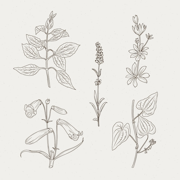 Monochromatic herbs and flowers Free Vector