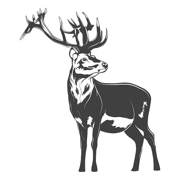 白で分離されたモノクロの鹿 Premiumベクター