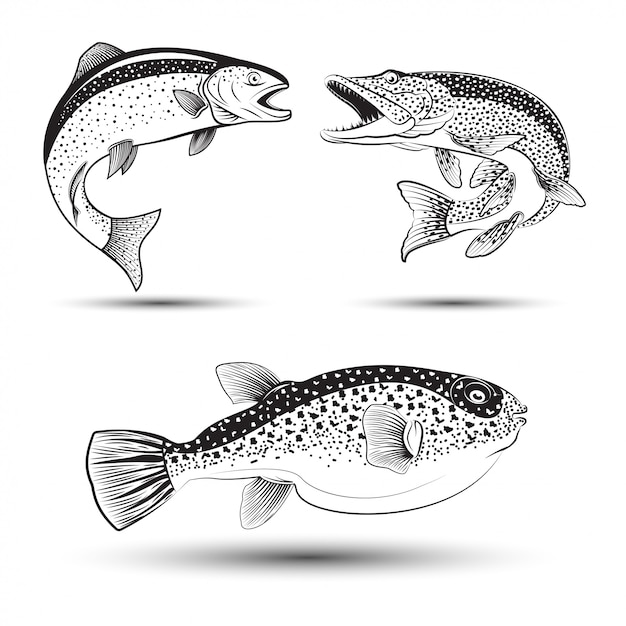 Monochrome illustration of  pike, trout and fugu, set of fishes , Premium Vector