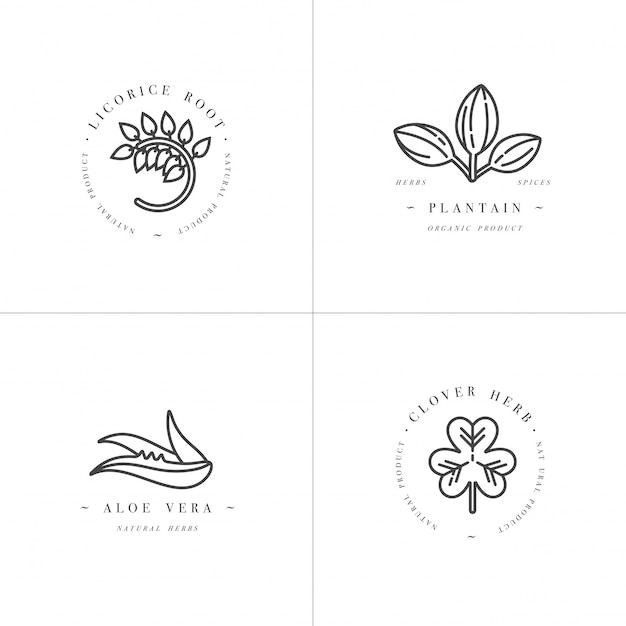 Monochrome set design templates - healthy herbs and spices. different medicinal, cosmetic plants- licorice, aloe vera, plantain, clover. logos in trendy linear style. Premium Vector