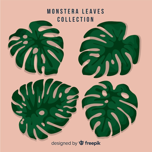 Monstera leaves collection Free Vector