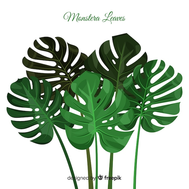 Monstera leaves group background Premium Vector