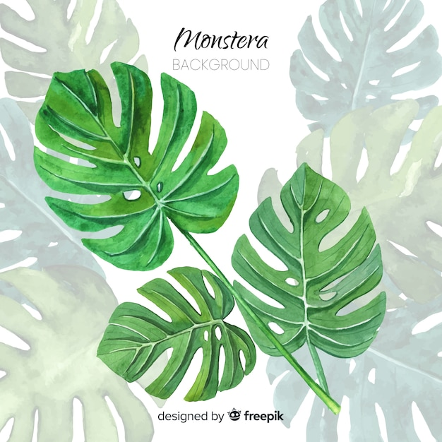 Monstera leaves Premium Vector