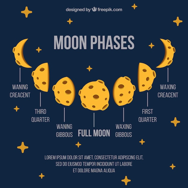 Moon phases with decorative stars in flat design Free Vector
