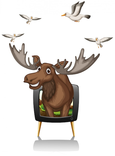 Moose and birds on television screen Free Vector