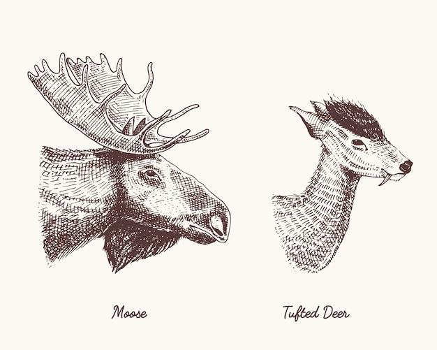 ムースやユーラシアのヘラジカ、房状の鹿のベクトルの手描きイラスト、枝角や角を持つ野生動物が刻まれたヴィンテージの頭の側面図を探して Premiumベクター