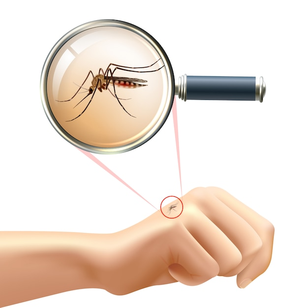 Mosquito on hand Free Vector