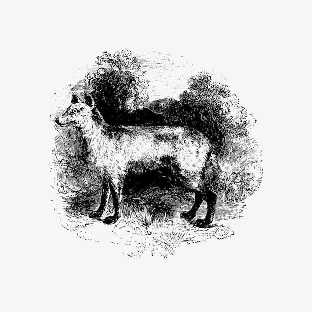 Mountain fox vintage drawing Free Vector