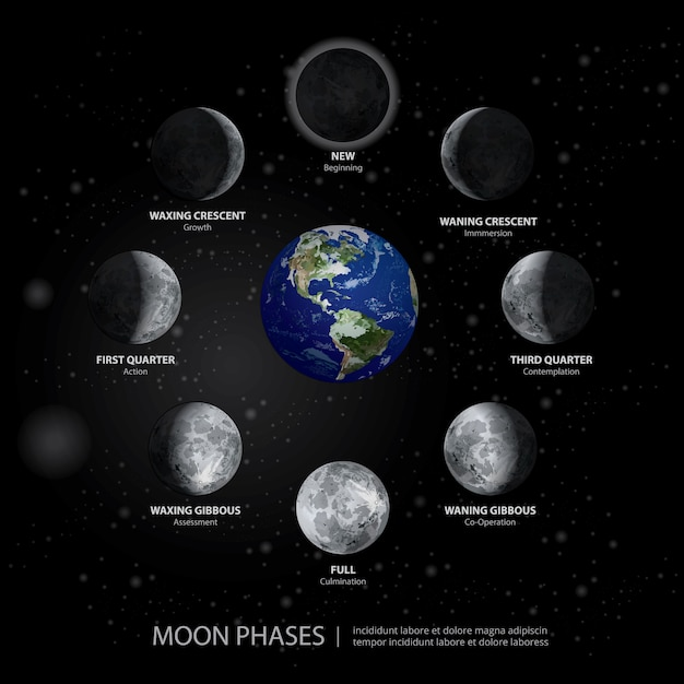 Movements of the moon phases realistic vector illustration Premium Vector