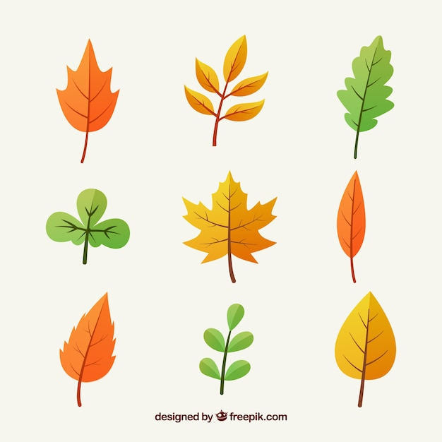 multicolor autumn leaves collection vector free download