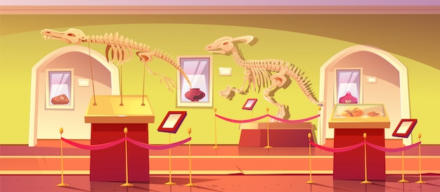 Museum of history with dinosaur skeletons, ancient insects in amber, clay pot and dino fossils. artifacts at historical exhibition. paleontology or archaeology science, cartoon illustration Free Vector