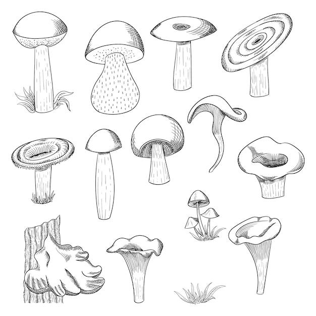 Mushroom hand drawn sketch  illustration. mushroom shiitake, fresh organic food isolated on white. Premium Vector