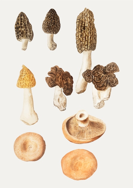 Retro mushroom autumn deer