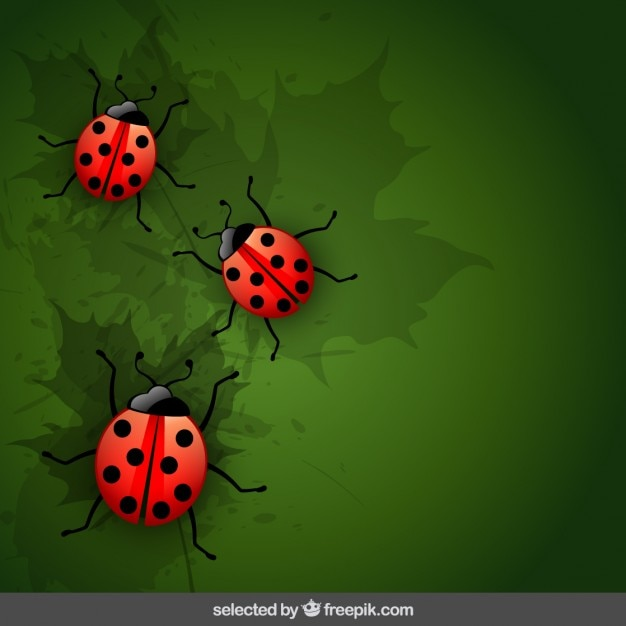 Natural background with ladybugs vector free download natural background with ladybugs free vector stopboris Images