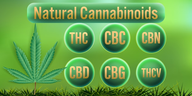 Natural cannabinoids in cannabis. Premium Vector