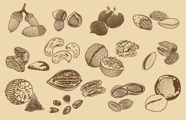 Natural organic nuts elements collection Free Vector