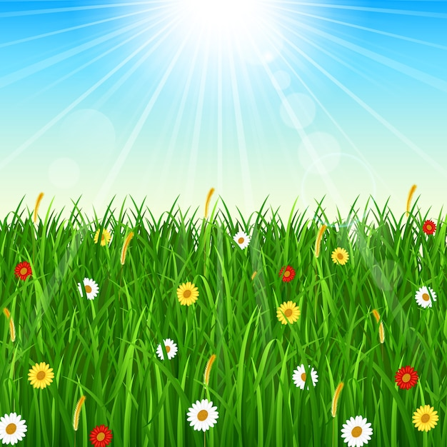 green grass blue sky flowers nature nature background with green grass blue sky and bright sun premium vector