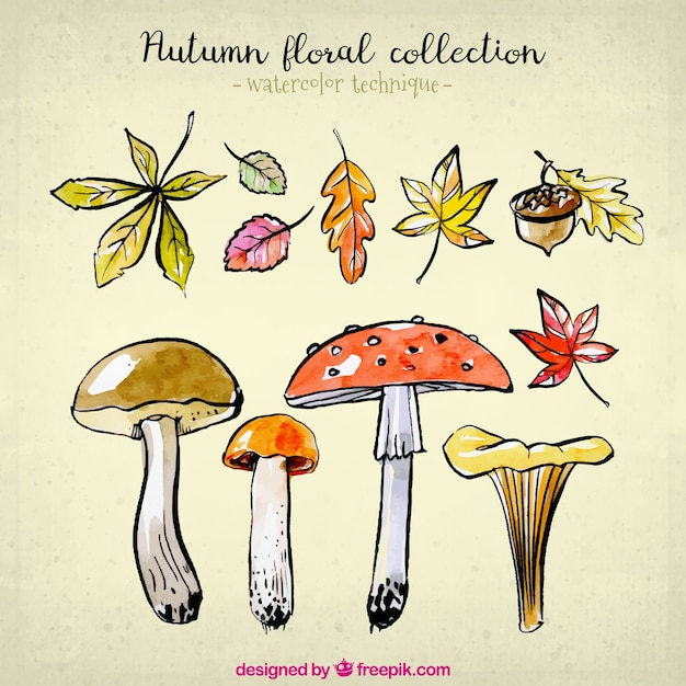 Nature collection for autumn in\ watercolor