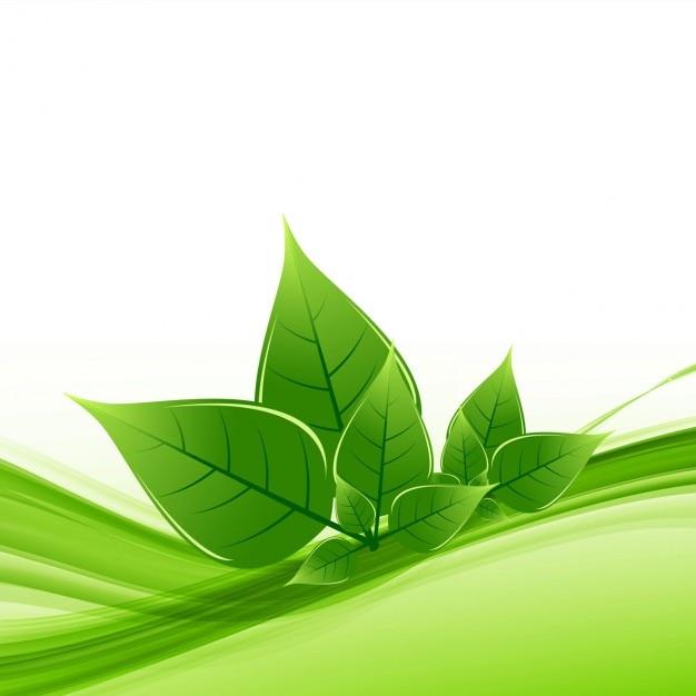 Nature leaf background Vector | Free Download