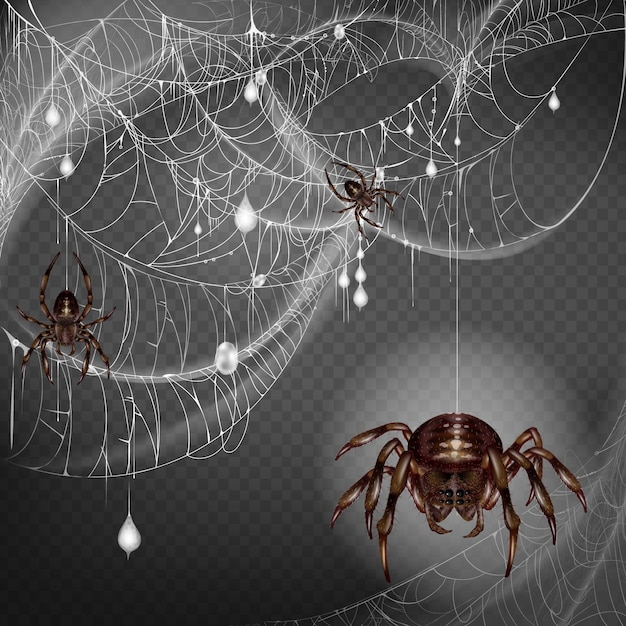 Nest of dangerous and scarifying spiders Free Vector