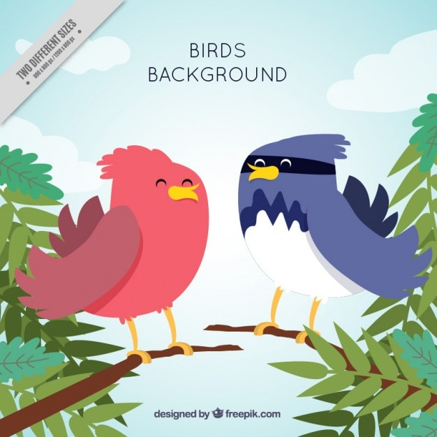 Nice background of tropical birds
