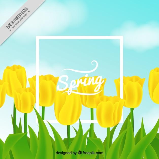 Nice background of yellow tulips