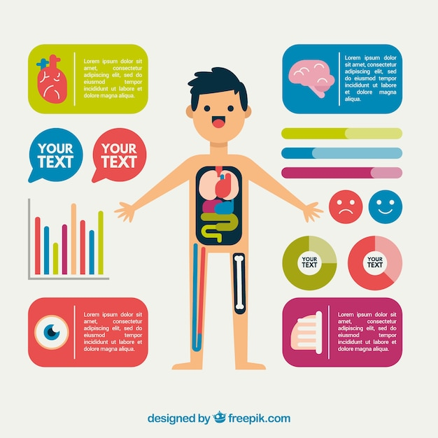 Nice infographic of the human body in flat design Free Vector