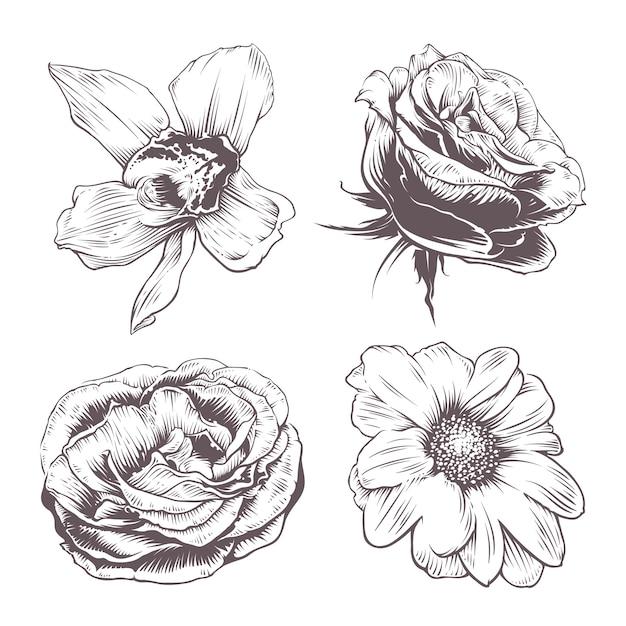 ベクトルの花のセット 無料ベクター
