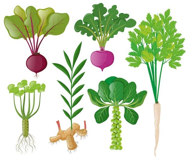 Amazoncom Jobes Organics Bone Meal Fertilizer 2140 Organic Phosphorous Fertilizer for Vegetables Tubers Flowers and Bulbs 4 Pound Bag Garden amp Outdoor