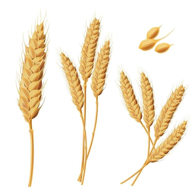 「小麦無料イラスト」の画像検索結果